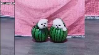 Funny Animal Videos Compilation cute moment of the animals-Cute dog#07
