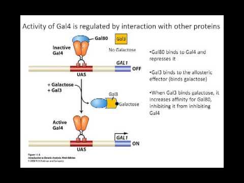 Gal system in eukaryotes