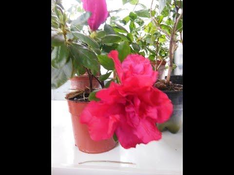 # Комнатные растения/ цветы. Мои антидепрессанты.
