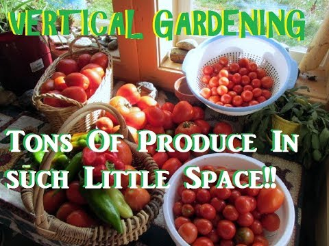 Grow 53 Plants in 4 Sq Ft with a Garden Tower Vertical Container Garden??