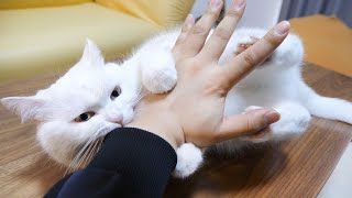 猫 ポムさん