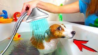 ДЖИНА СБЕЖАЛА ИЗ ВАННОЙ КАК ПОМЫТЬ СОБАКУ ЗА 5 МИНУТ | Elli Di Pets