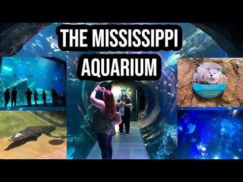 A Visit To The Mississippi Aquarium