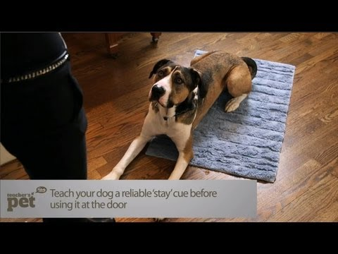 teach-your-dog-to-stay-at-the-door-|-teacher's-pet-with-victoria-stilwell