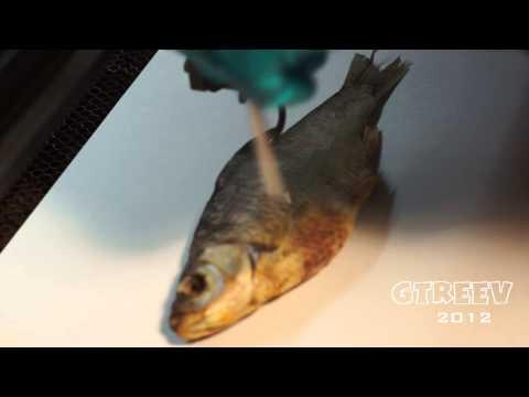 Лазерная гравировка на рыбе/Laser engraving on the fish