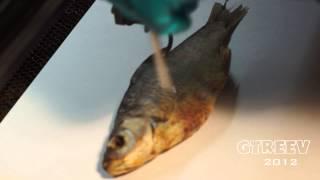 Лазерная гравировка на рыбе/Laser engraving on the fish(, 2012-12-09T00:03:27.000Z)