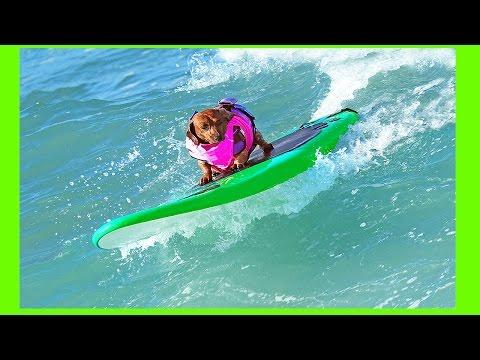 Coppertone Surf Dog Brazil