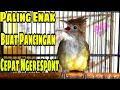 Pancingan Cucak Jenggot Jawa Paling Cepat Ngerespont  Mp3 - Mp4 Download