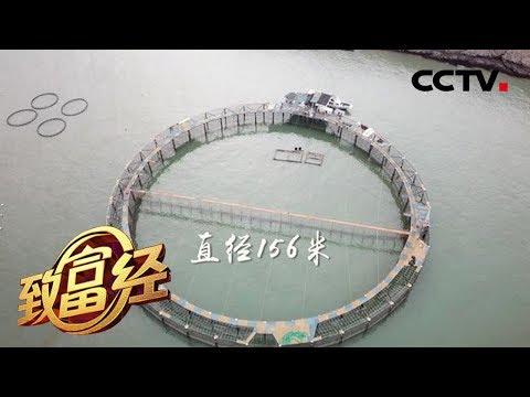 《致富经》 神秘大网 一网卖出3000万 20180627 | CCTV农业