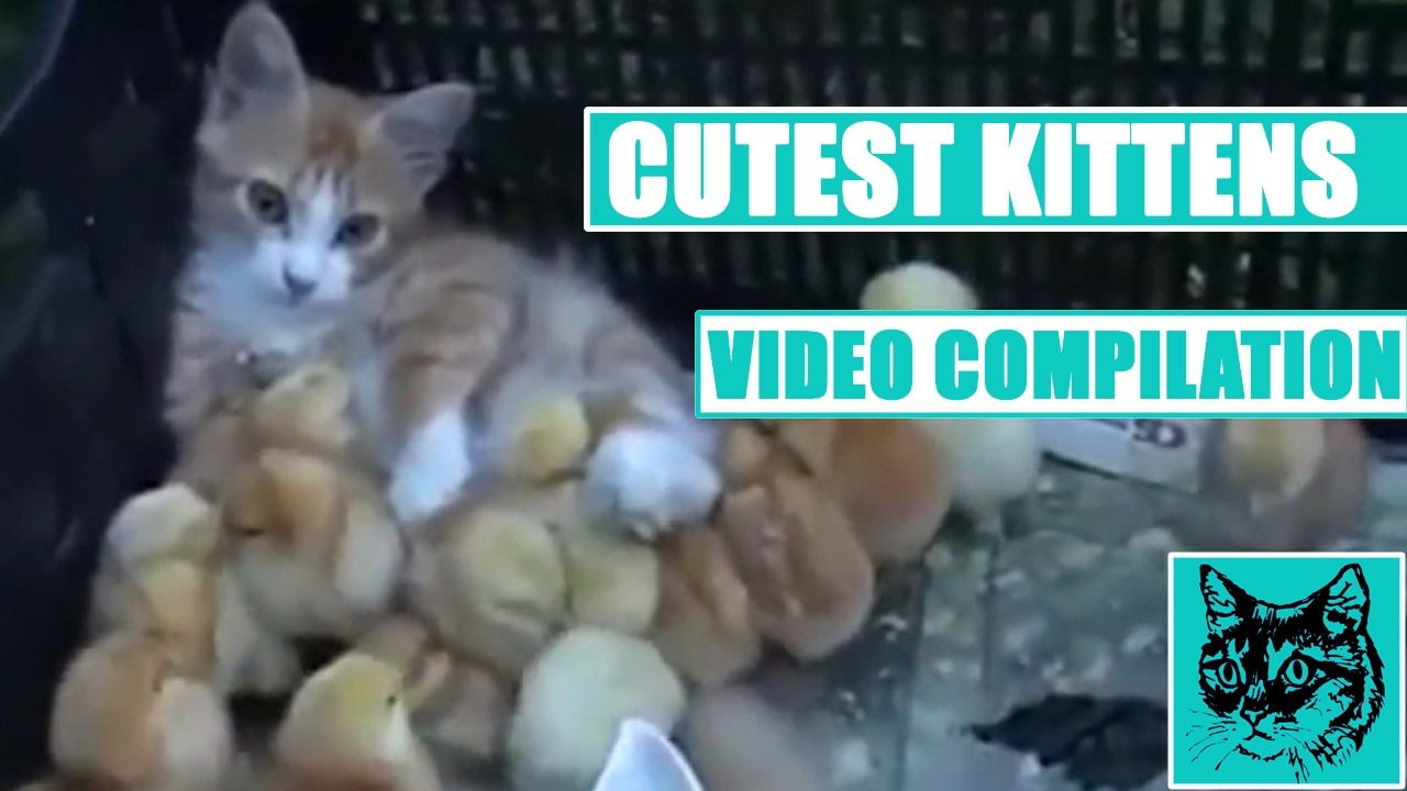 CUTEST KITTENS EVER! 2017 EDITION! - YouTube