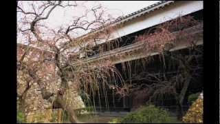 高知城では梅の花が咲き始めました。春がすぐそこまでやって来たようで...