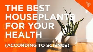The Best Houseplants For Your Health (According To Science)