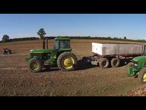 Tomato Harvesting - Janssens Farms Dresden Ontario
