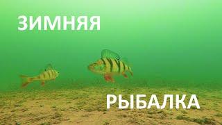 Зимняя рыбалка Подводная съёмка