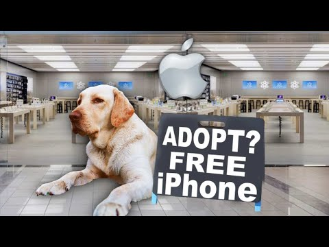 Surprising People With IPhone 11 Who Adopt A Dog! Then Customizing Them (Giveaway)
