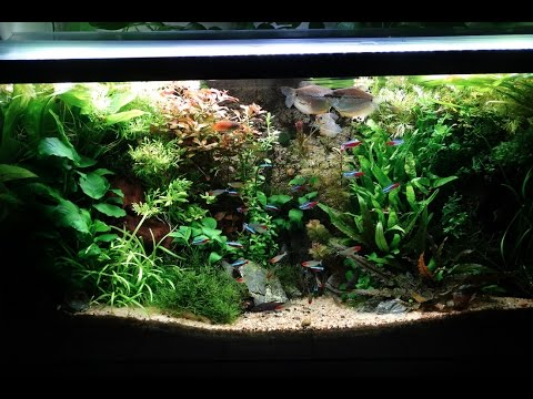 38 gallon planted community aquarium update 12 youtube for 38 gallon fish tank