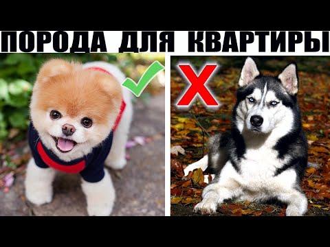 ТОП 10 Пород Собак для Квартиры