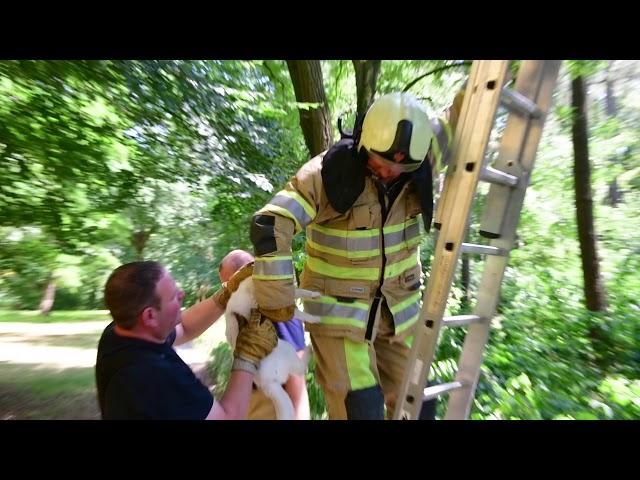 Zeister Brandweer redt kat uit boom in Vollenhove park
