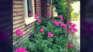 Мой любимый сад