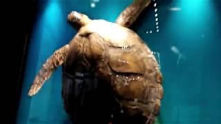 aquazoo dusseldorf (löbbecke museum) - düsseldorf - aqua-zoo - Germany