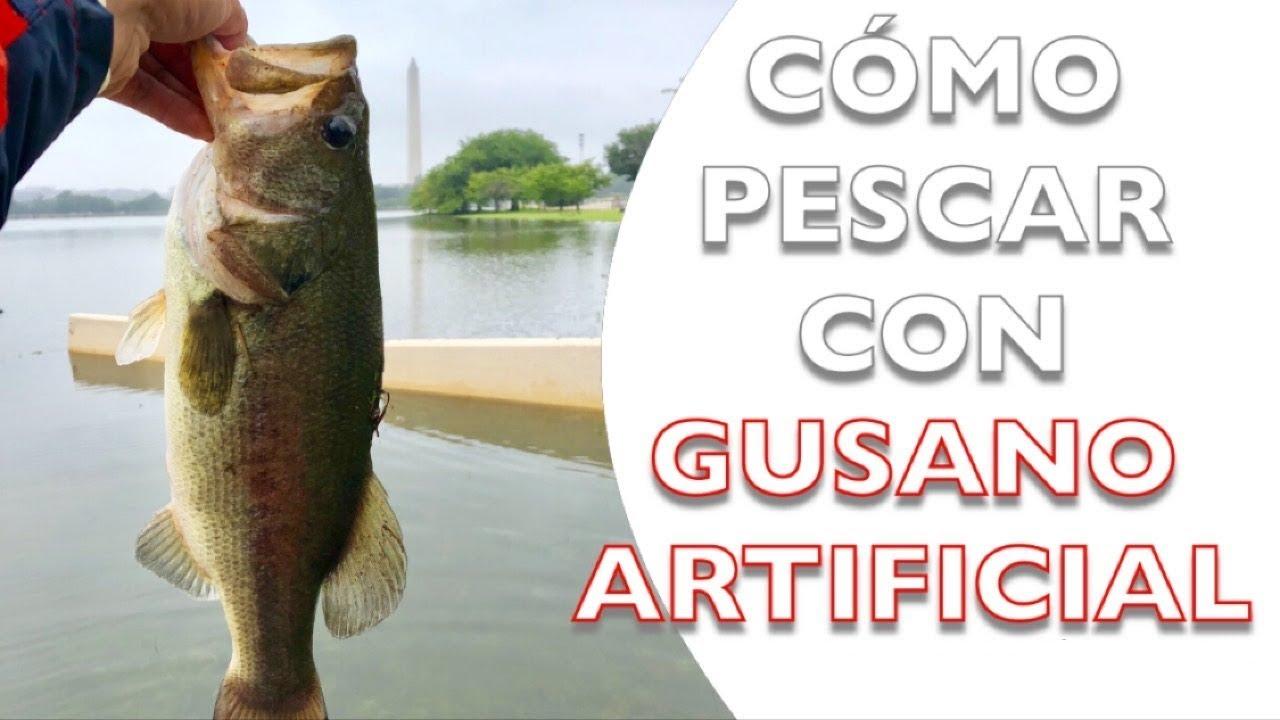 Cómo Pescar Con Gusano Artificial Técnica Ned Excelente Pesca De Bass Lobina En Washington Dc Youtube