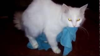 Кот и полотенце, от смеха болит живот))))