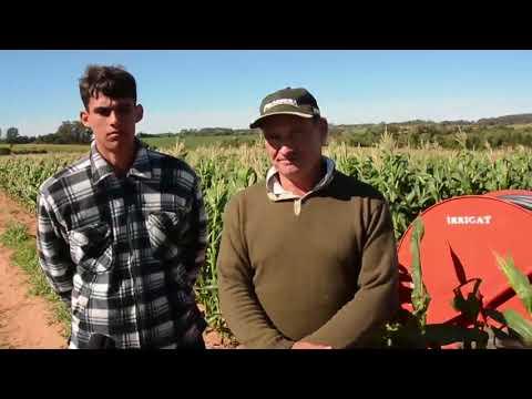 💧🌾 Milho irrigado: de 12 ton por hectare para 30 ton por hectare