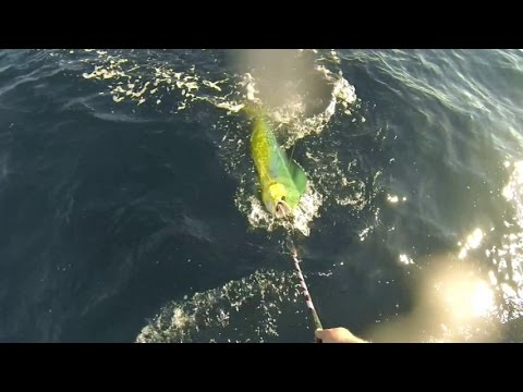 Snapper, AJ's, Mahi's and Kings Offshore Fishing Gulf of Mexico 10/11/13 [GOPRO HERO 3]