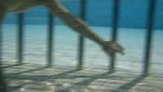 游泳教學...水中站立(5歲)