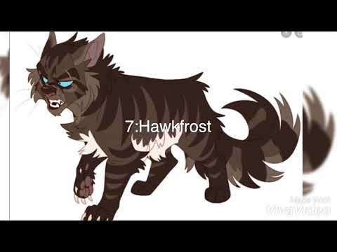 Top 7 Best at fighting warrior cats