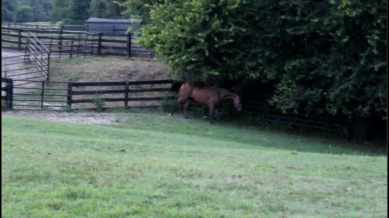 WILD Horse Runn...
