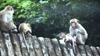 Monkeys of Khao Kheow