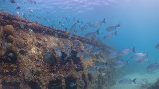 Wrecks of Barbados Thumbnail