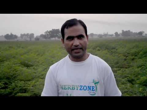 Moringa Growers in Pakistan Visited by Herbyzone Marketing team 03334120090, 03460049624, 0300049624