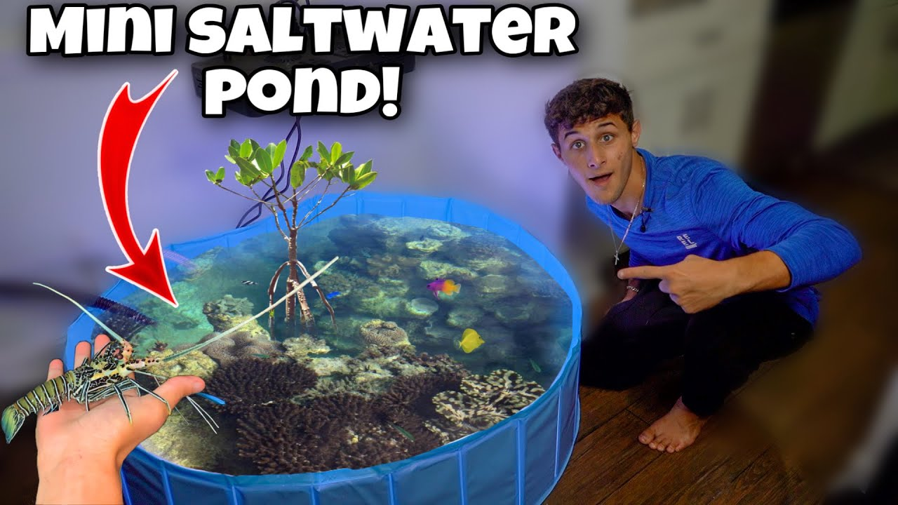 The NEW Saltwater MINI POND With FISH!!