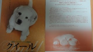クイール B 2004 映画チラシ 2004年3月13日公開 【映画鑑賞&グッズ探求...
