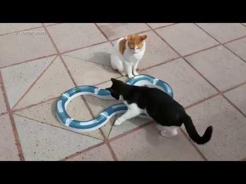 Cat Plays With Catit Senses Super Roller Circuit Toy | 4K