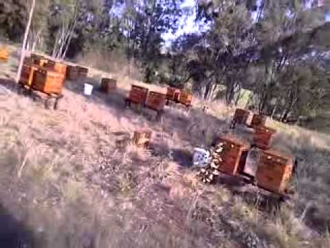 Bee Hive Project - Cape Town - Western Cape - 2013
