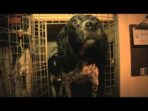 Gun Dog Broker: In The Field With Mark Fulmer Of Sarahsetter Kennels, Kennel Doors Wide Open