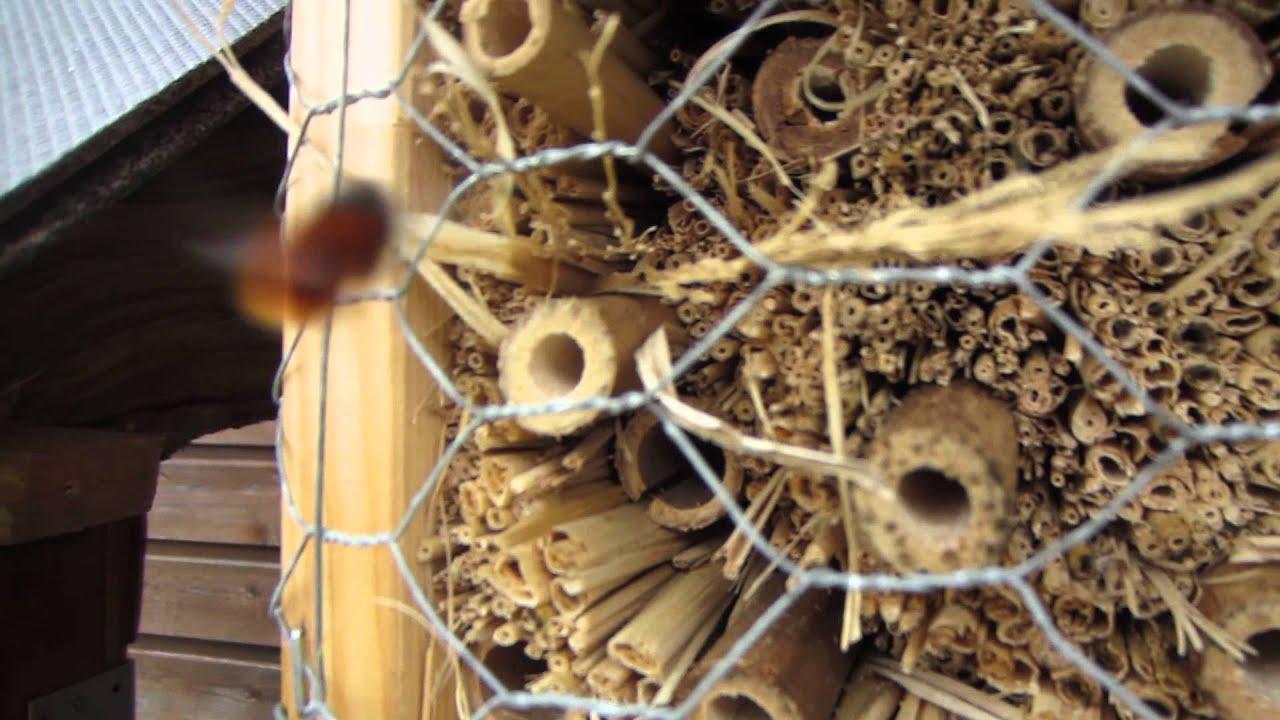 insektenhotel erste bewohner mauerbienchen youtube. Black Bedroom Furniture Sets. Home Design Ideas