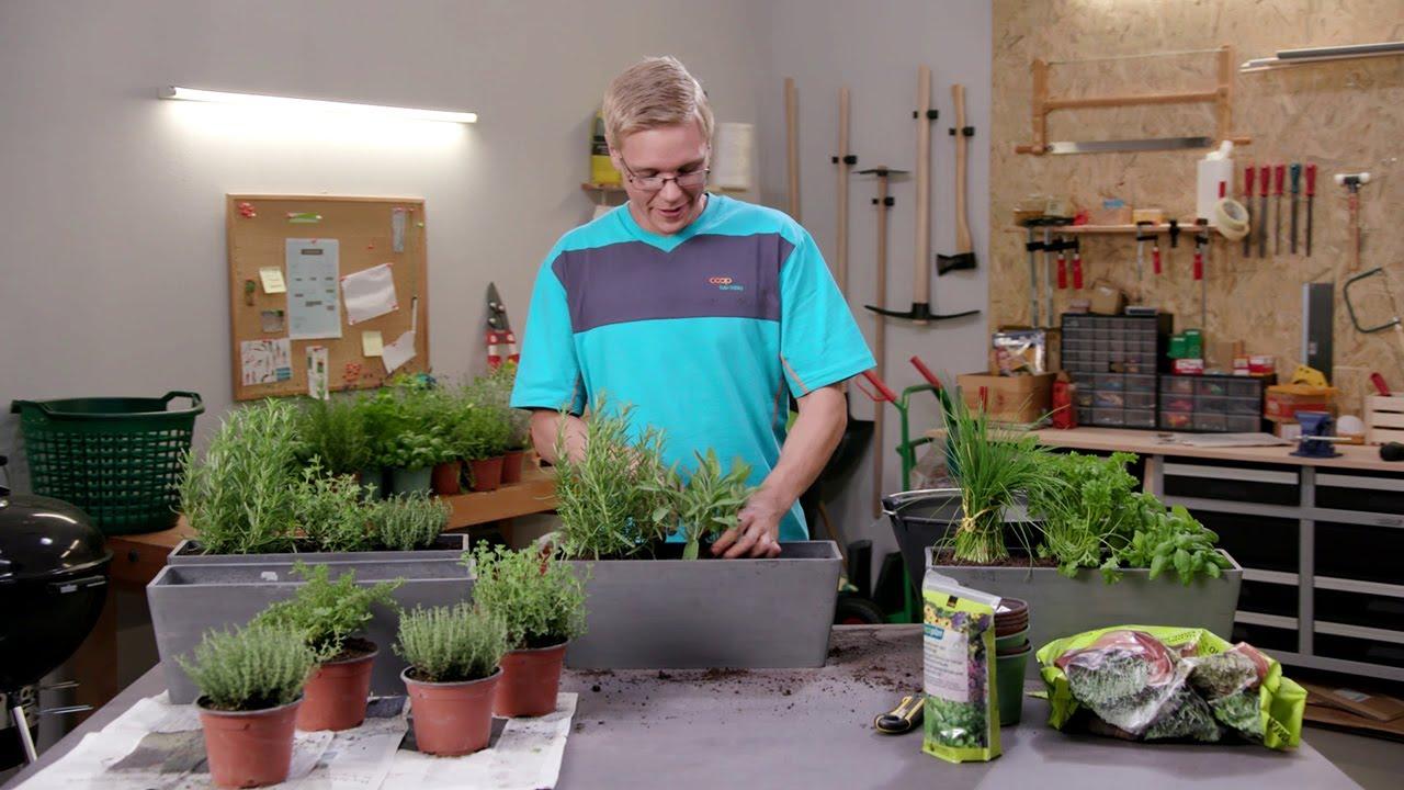 Coop Bauhobby Tutorial Welche Kräuter Pflanzen Youtube