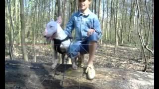 Bull Terrier  Killing Nature  Trimmed