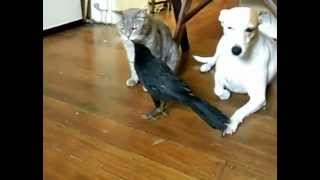 Ворон Кормит Собаку И Кошку