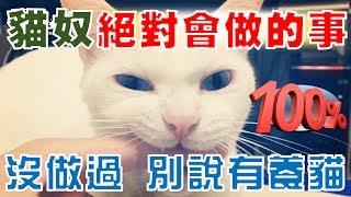【豆漿 - SoybeanMilk】貓奴必做!! 怎麼玩都玩不膩的事!!