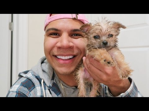 Thumbnail: SURPRISED HER WITH A PUPPY!!