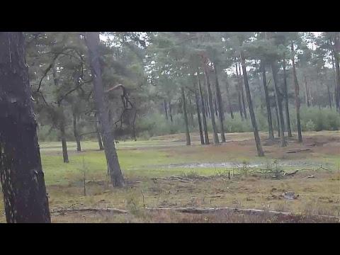 Live webcam Hoge Veluwe