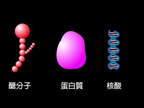 「醣科學」動畫