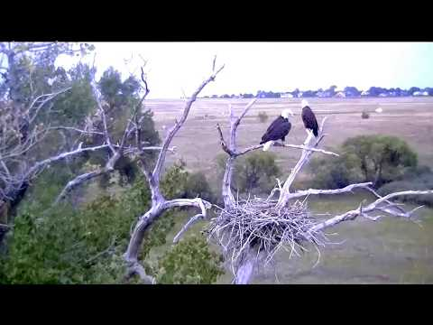 Standley Lake Regional Park Eagles CO  9 7 17 830pm Great To See This Eagle Pair At Their Nest