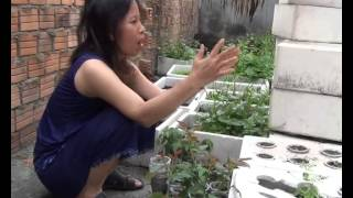 DN03 - Local youth build urban resilience with hydroponic cultivation technique