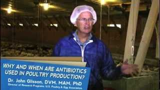 Poultry Insight: Why and When Are Antibiotics Used in Poultry Production?
